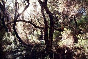 Pathless woods - Madeira by arsidoas