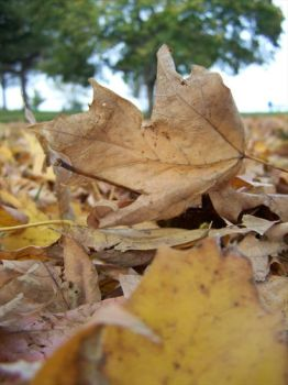 Autumn Leaves 2 by scars-cry-blood