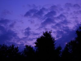 Dusk Clouds Over The Trees 1 by Animalluver1985