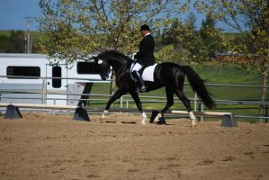Dressage Stallion by kalalynn