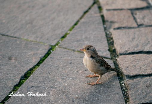 Bird by lubnahabash