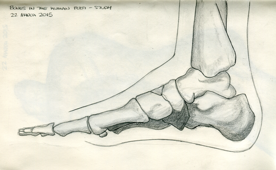 ArtBuddy - Foot studies - 02 - March 2015 by Summitwulf