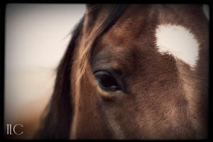 beauty in the equine by TlCphotography730