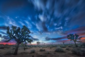 For of the time, Joshua Trees Park, California by alierturk