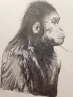 Caesar (planet of the apes)   by nicoleinc