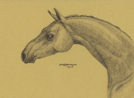 Horse 3 by Song-Gamayun