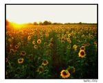 Forever Sunflowers by crystalfalls