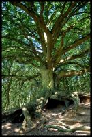 Oak tree by grimleyfiendish