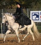witch on white andalusian by Nexu4
