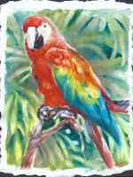 Senor Parrot by AndrewLaFish-Arts