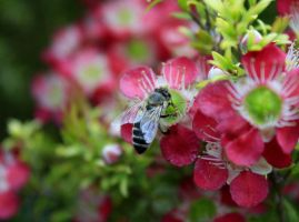 Bees 2 by Coraloralyn
