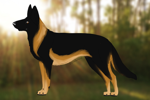 ID 0018 GSK's Capone by GoldenSunKennel