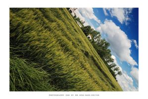 Green fields of summer - VI by DimensionSeven