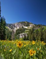 The Sunflowers and the Mountain by mjohanson
