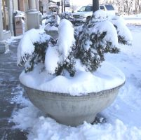 Potted tree in winter by Vivienne-Mercier