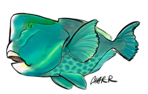 ParrotFish Caricature by CharReed