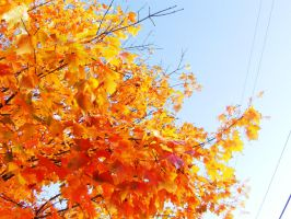 The colors of my season. by Halzly
