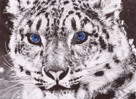 Snow Leopard in BiC Pen by TheKrystleGallery