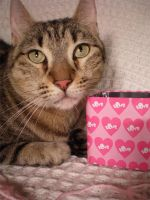 Cat with a Box of Love by JacquiJax-Stock