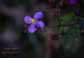 Nature purple by HenriqueAMagioli
