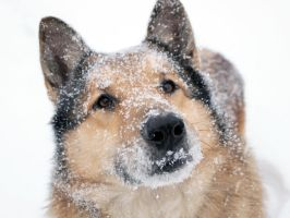 Max loves snow. by 3ammy