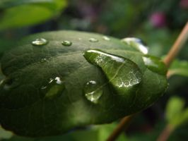 Water Drops On Leaf by Moka898