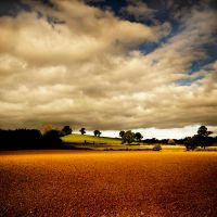 Fallow Earth by Dave-Ellis