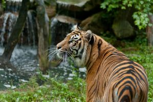 In the Jungle by tleach0608