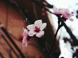 YOU-cee: Blossom by YOU-cee