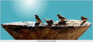 Finches by WestOz64