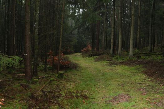 Forest Stock 045 by Malleni-Stock