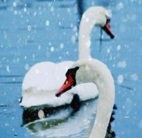 A Winter Swan Song by SinInjection