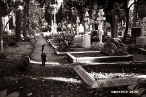 cagliostro acatholic cemetery by gagel