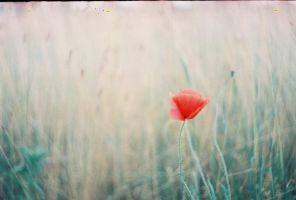 Made by Zenit 5 by haania