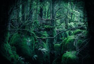 Home of the Wood Elves by erynlasgalenphotoart