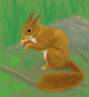 Squirrel by isibis7