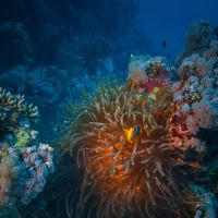 Colors Of Red Sea by Vitaly-Sokol