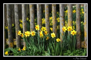 Spring flowers15 by Phototubby