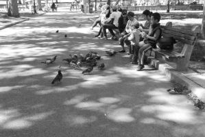 Pigeon Social In the Park by Miss-Tbones