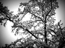 snow 2009 13 by LBBPhotography