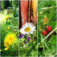 Middle of July by Lum1pallo