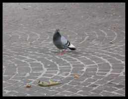 Pigeon by Alberto-stock