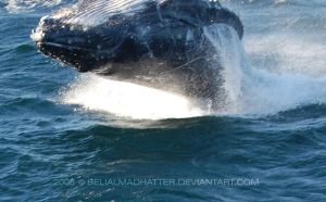 082 close to the whale by BelialMadHatter