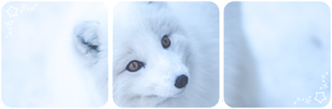 Arctic fox deco divider by Martith