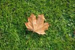shedding of autumn leaves 12 by Armandacyd