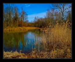 The Pond by bamako