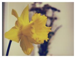 narcis. by kamellie