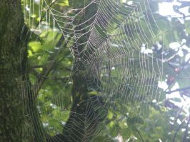 spider web by JuneButterfly-stock