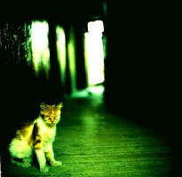 cat- by AnalogPhotographers