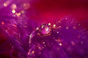 Purple gem on feather by AngiWallace